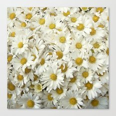 Daisy Mum Profusion Canvas Print
