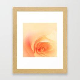 soft roses Framed Art Print