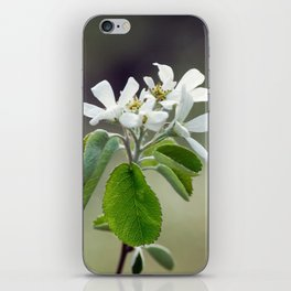 Malus flowers - spring 30 iPhone Skin