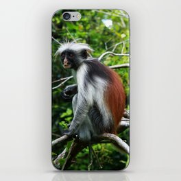 Red Colobus Monkey iPhone Skin