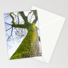Abstract details of acacia tree trunk Stationery Cards