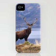 RED DEER STAG Slim Case iPhone (4, 4s)