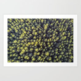Pines from the top. Art Print