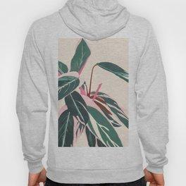 Stromanthe Sanquinea Hoody