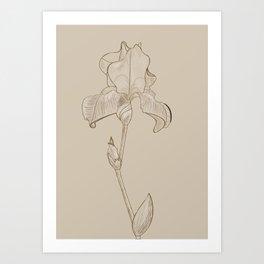 Iris sketch Art Print