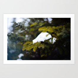 Pine Needles in Labrador Art Print