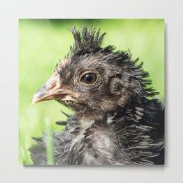 Strupp fun little chicken chick Metal Print