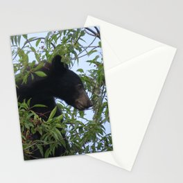 Bearly-Contained Excitement Stationery Cards