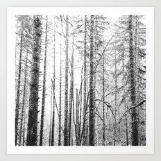 Forest Trees - Winter Wood Art Print