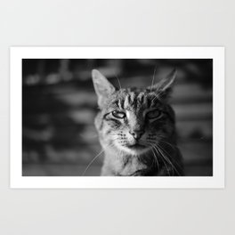 Ashes Cat Art Print