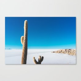 Cactus on Isla Incahuasi, Salt Flats, Bolivia Canvas Print
