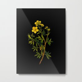 Potentilla Fruticosa Mary Delany Vintage Floral Collage Botanical Flower Metal Print