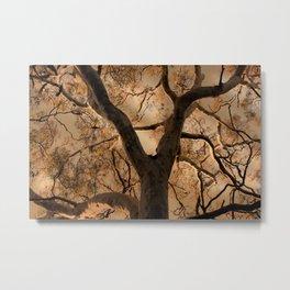 Big Tree, Late Afternoon Metal Print