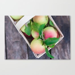 Apples for Pie Canvas Print