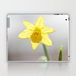 Daffodil V Laptop & iPad Skin