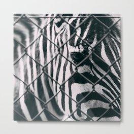Sad Eyes - Zebra Metal Print