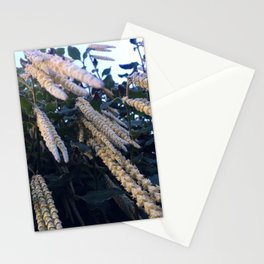 Looking Up At A Hanging Plant Stationery Cards