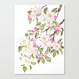 botanical pink apple blossom flowers watercolor Canvas Print