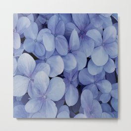 Hydrangea Florets Metal Print