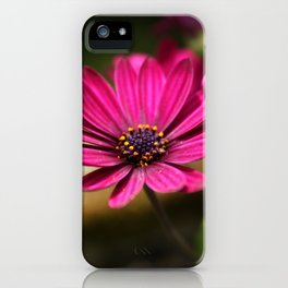 pink cape daisy iPhone Case