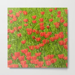 tulips field Metal Print