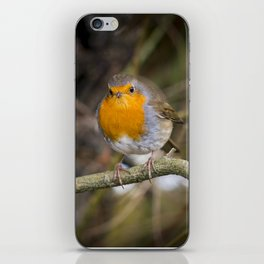 Robin on a Branch iPhone Skin