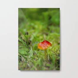 Little Red Mushroom I by Althéa Photo Metal Print