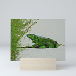 Iguana in Ding Mini Art Print
