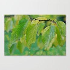 Natures Way Canvas Print