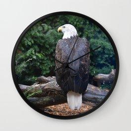 National Aviary - Pittsburgh - Bald Eagle 1 Wall Clock
