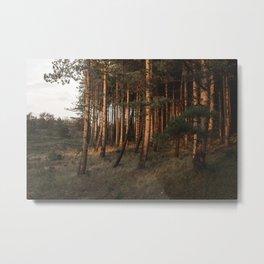 Sunlit autumn forest Metal Print