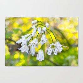 White woodland flora. Canvas Print