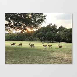 Lakeway Deer at Sunset Canvas Print