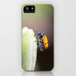 Lachnaia sexpunctata on lily iPhone Case