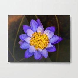 Purle Flower Metal Print