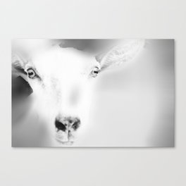 Got your Goat Canvas Print