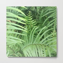 Exotic Palm Leaves Close-Up In Rainforest Jungle Metal Print