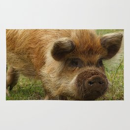 March of the Ginger Pig Rug
