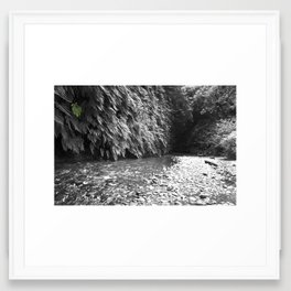 Fern Canyon Framed Art Print