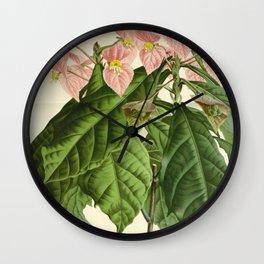 Flower dalechampia roezli rosea Wall Clock