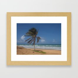 Karon Beach palm tree Framed Art Print