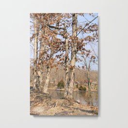 Hidden Lake Shore - Shelbyville, IL Metal Print