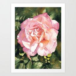 Pink rose watercolor painting Art Print