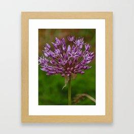 Passion for Allium Framed Art Print