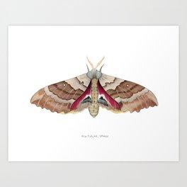 Big Poplar Sphix Art Print