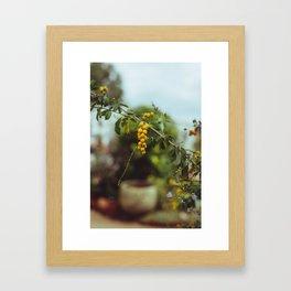 Yellow Berry Framed Art Print