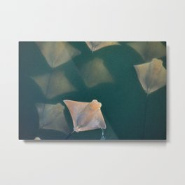 Stingray Fever on the Surface Metal Print