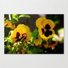 Yellow pansy garden Canvas Print