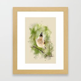 Watercolor Tufted Titmouse Art Framed Art Print