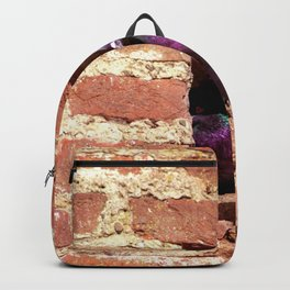 Concept nature : Dove nest in the city wall Backpack